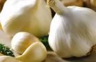 Сорт чеснока: Самородок