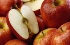 Ученые сомневаются в пользе яблок