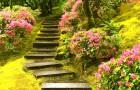 Какие выбирать растения для дорожек двориков и садов