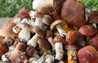 Способы заготовки грибов