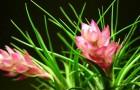 Цветок, который растет прямо в воздухе