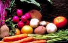 Новое явление - благотворительные огороды
