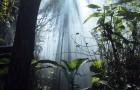 Растения тоже страдают от пищевых расстройств