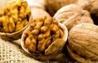 Состав и применение ореха грецкого