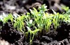 Стимуляция роста растений и увеличение урожайности