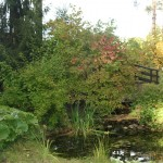 Пруды и водоемы