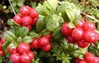 Диета из сырых фруктов и овощей из вашего сада