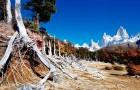 Корни горных лесов – термостат нашей планеты