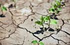 Растения натренируют переносить засуху