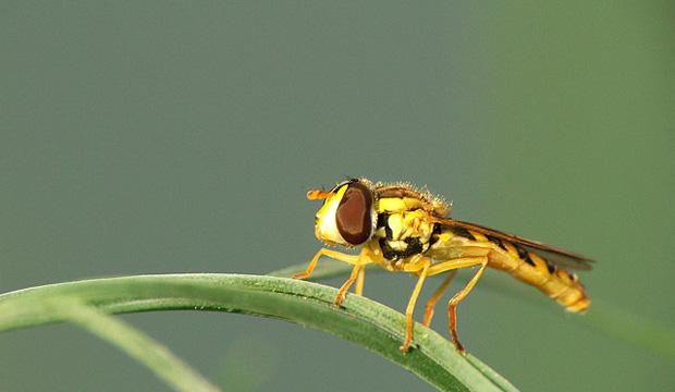 Выбор насекомых зависит от соседей растения
