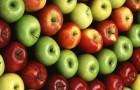 Могут ли ГМО яблоки испортить хорошую репутацию этого фрукта?