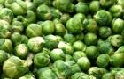 Использование брюссельской капусты в диетах