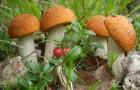 Кулинария для диабетика — грибы