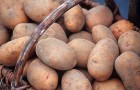 Кулинария для диабетика — картофель