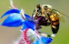 Нектар – сладкая награда опылителей