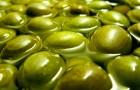 Очень люблю оливки. Расскажите о них подробнее