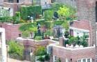 Огород во дворе или городское садоводство