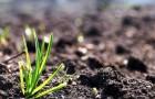 Сама земля восстанет против сорняков