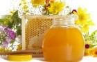 Сколько меда рекомендуется включать в рацион питания?