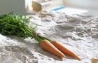 Морковка и петрушка помогают в лечении рака