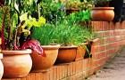 овощи на подоконниках и балконах