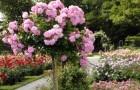 Формирование роз на дереве