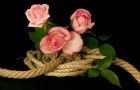 Формирование роз на канатах