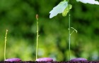 Как растения контролируют своё развитие