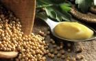Обычная горчица – один из самых полезных продуктов