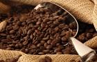 Пара секретов йеменского кофе