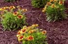 Потребности растений и агротехника