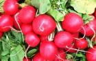 Руководство по быстрорастущим овощам