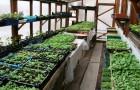 Секреты выращивания рассады овощей в теплице
