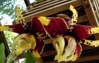 Стангопея тигровая