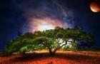 В космосе деревья растут в два раза быстрее