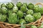 Четвёрка лучших весенних овощей с грядки