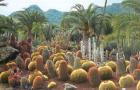 Сад Кактуса
