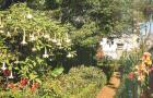Сад акклиматизации Оротавы