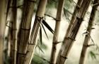 Бамбуки и другие травы