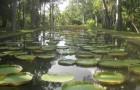 Ботанический сад сэра Сивусагура Рамгулема