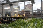 Ферма, которая зеленеет на крыше