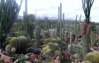 Кактусовый сад Шейлам