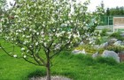 Методы формирования плодовых деревьев