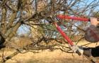 Обрезка многоствольного дерева