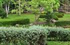 Омолаживание кустарников