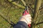 Основы техноки обрезки деревьев