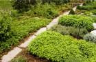 Полезные советы для создания травяного садика
