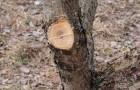 Проведение срезов на деревьях