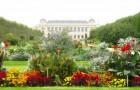 Сад растений