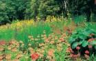 Сады Клайн